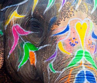 ElephantjaipuriStock_000015117877XSmall